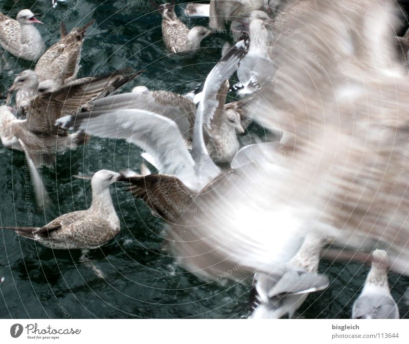 Seagulls I Subdued colour Exterior shot Deserted Day Motion blur Bird's-eye view Animal Water Wild animal Wing Group of animals Flock Flying Speed Chaos Loud