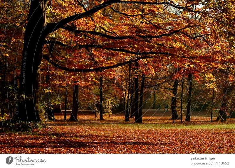 Tree Leaf Autumn Park Share Maple tree Oak tree Birch tree Beech tree