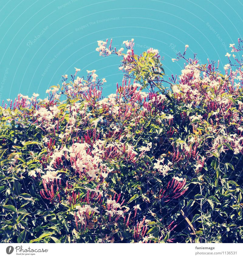 Sky Nature Plant White Summer Flower Red Environment Spring Blossom Garden Pink Park Bushes Beautiful weather Cloudless sky