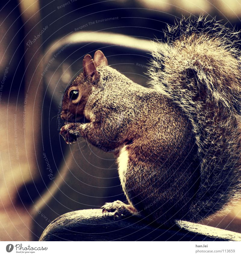 Animal Relaxation Nutrition Small Sweet Bench Delicious Appetite Paw Mammal Squirrel Rodent Avaricious Egotistical