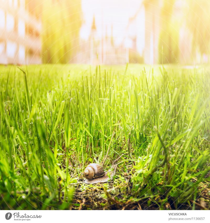 Snail on the move in the city Lifestyle Summer Garden Environment Nature Sunlight Spring Autumn Beautiful weather Grass Town 1 Animal Moody