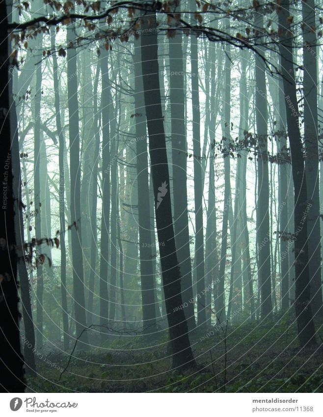 a morning in the woods Forest Tree Fog Dark Rain Green Leaf Grass Light Project Wet Damp Nature Fear Blur Branch End blair witch no To fall Death