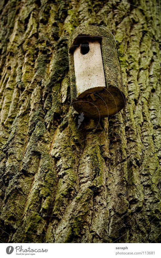 Home Sweet Home Tree trunk Tree bark Forest Ornithology Nesting box House (Residential Structure) Birdhouse Hang up Parental care Hollow Hiding place flown out