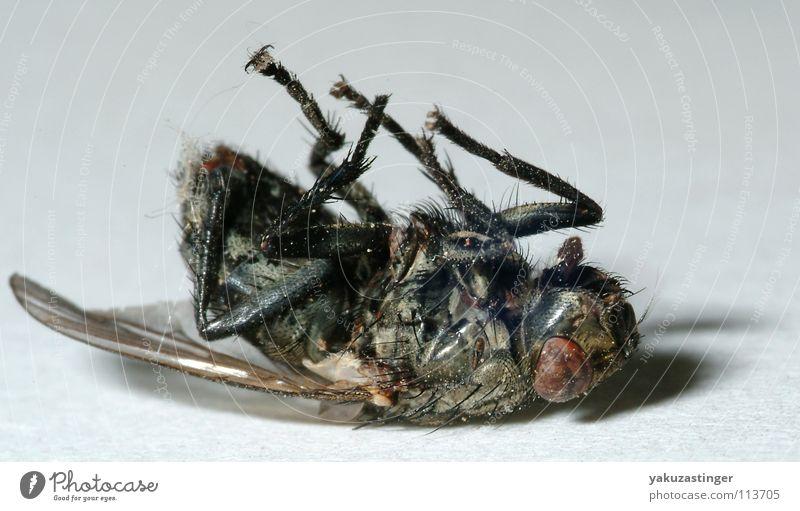 parasitenbefall auge ch.jpg
