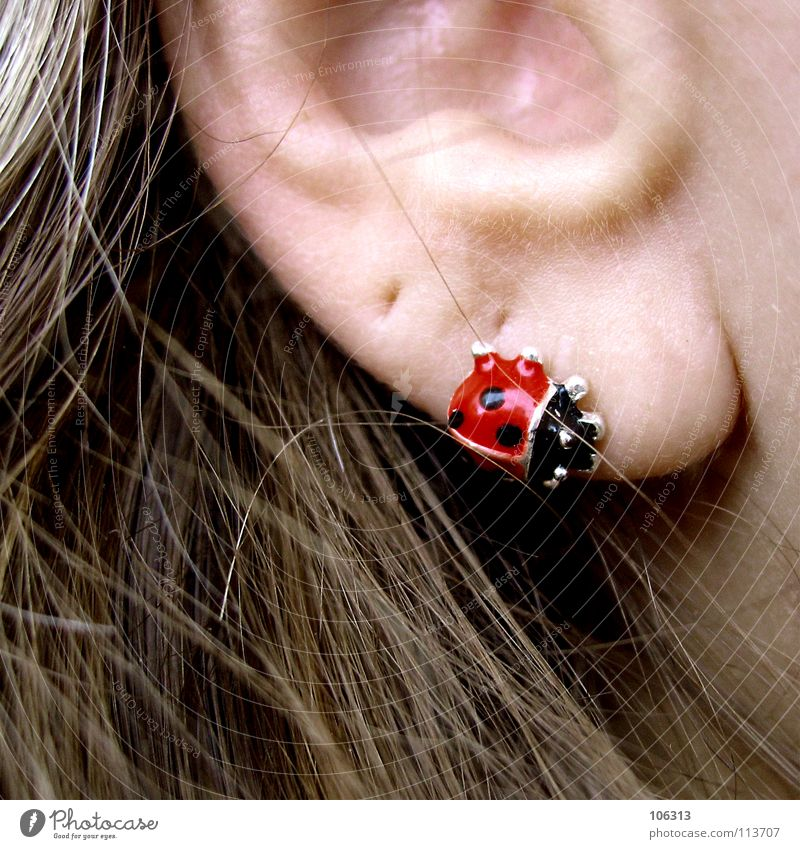 Human being Woman Beautiful Adults Feminine Hair and hairstyles Metal Skin Cool (slang) Ear Hip & trendy Jewellery Hollow Section of image Piercing Partially visible