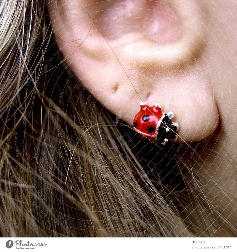 LOVE(D) YOU Beautiful Hair and hairstyles Skin Human being Feminine Woman Adults Ear Accessory Jewellery Piercing Earring Beetle Metal Cool (slang) Hip & trendy