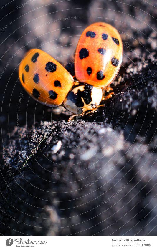 Summer Red Animal Black Love Spring Flying Elegant Open Free Esthetic Wing Beginning Joie de vivre (Vitality) Point Living thing