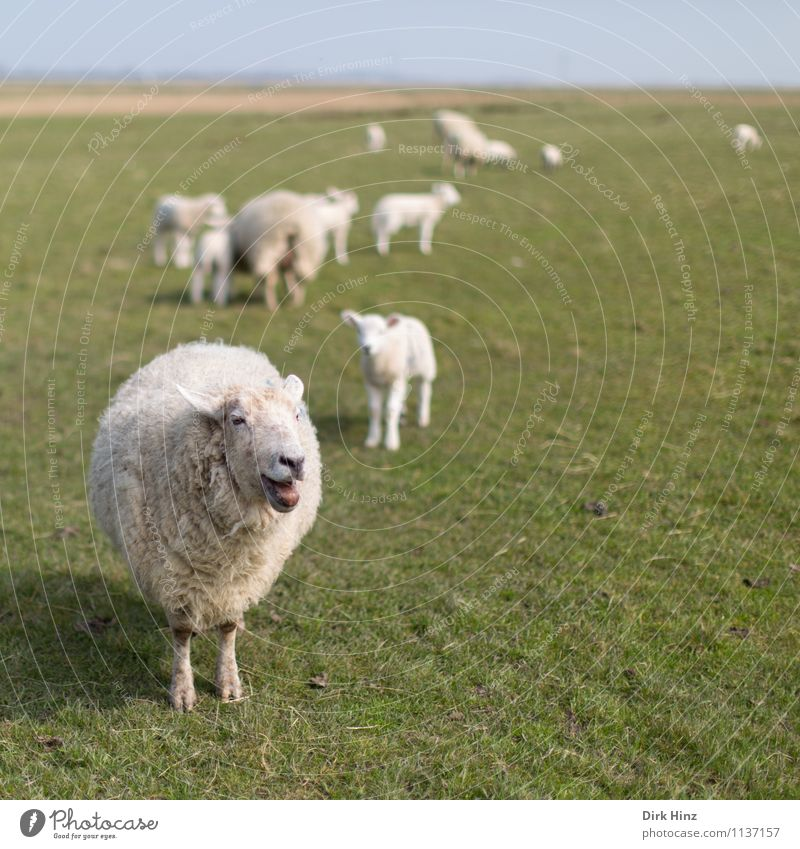 Nature Green White Relaxation Landscape Animal Environment Spring Meadow Wild Tourism Group of animals Observe Agriculture Pelt Tradition