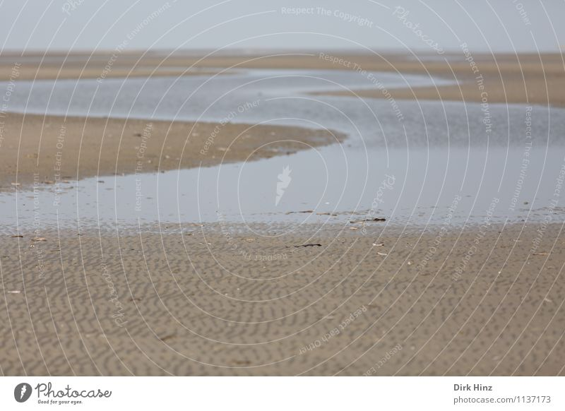 Nature Water Ocean Landscape Beach Environment Coast Sand Horizon Earth Climate Elements North Sea Maritime Mud flats Low tide