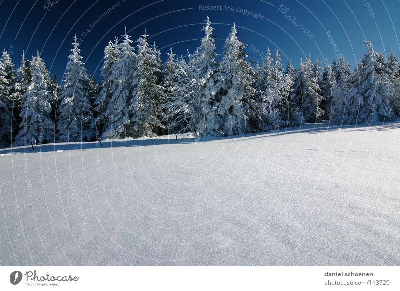 Christmas card 16 Winter Black Forest White Fir tree Coniferous forest Deep snow Hiking Leisure and hobbies Vacation & Travel Jinxed Mystic Abstract