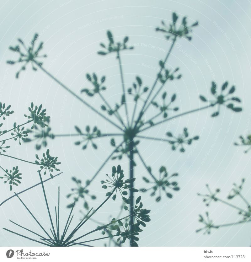 BLOSSOM STARRY III Beautiful Life Contentment Winter Decoration Wallpaper Success Sky Clouds Autumn Flower Blossom Blossoming Simple Tall Kitsch Above Blue Gray
