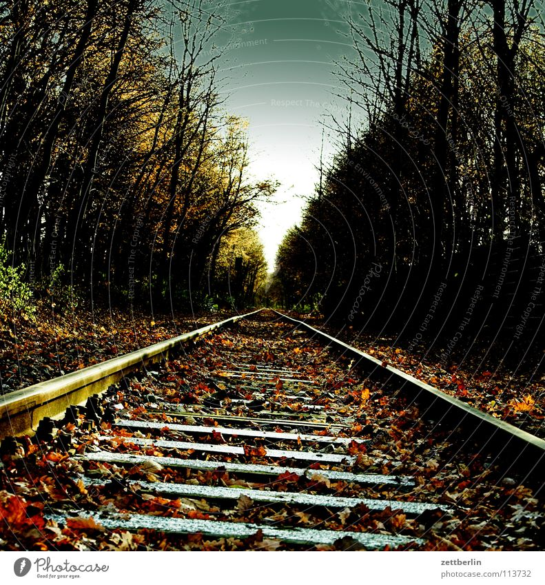 target Railroad tracks Rail transport Forest Ancillary road Horizon Vanishing point Autumn Winter Transport Train station threshold sleepers puffpufpuff