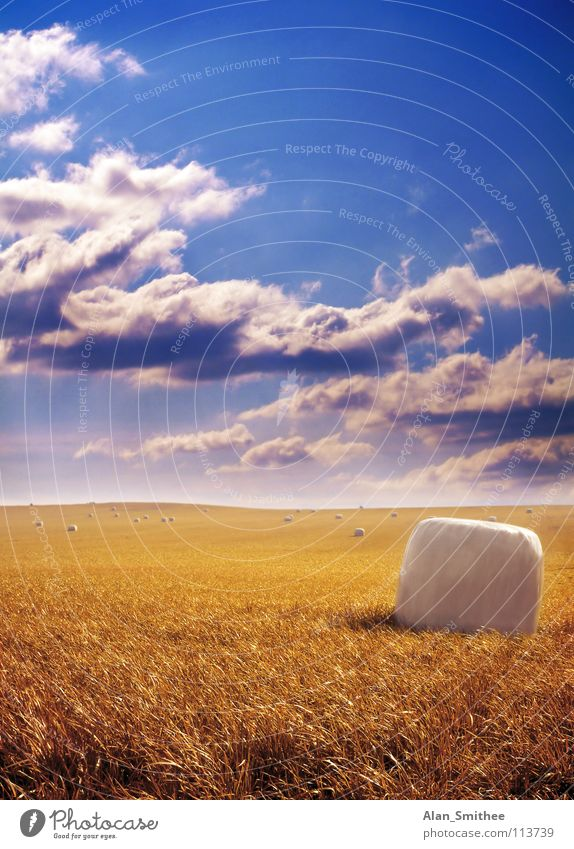 Golden Harvest Sky harvest crop wheat grain bale hay clouds field
