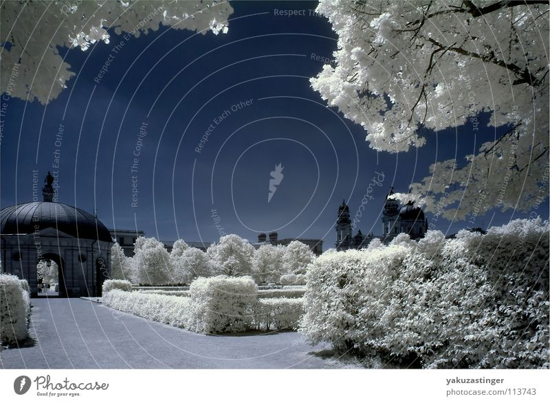 white summer Infrared Park Hofgarten White Munich Bavaria Colour channel exchange Blue beams woodeffect