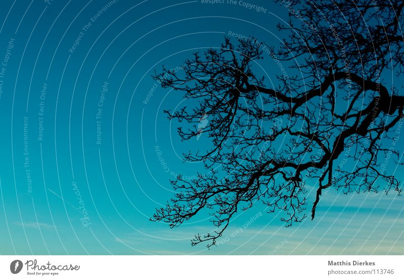 Sky Blue Green Tree Clouds Joy Dark Sadness Autumn Lighting Background picture Death Moody Horizon Rain Fog