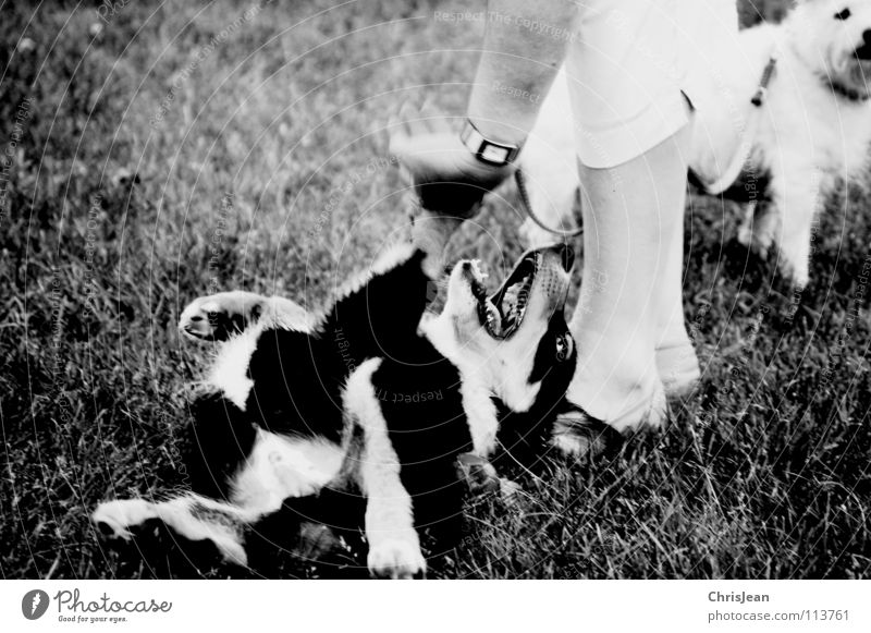 Bruno Dog Playing Animal Meadow Romp Paw 2 Hand Fingers Crossbreed Footwear Trust Action Joy Black & white photo Mammal owner Lie dog owners Legs Coil bruno