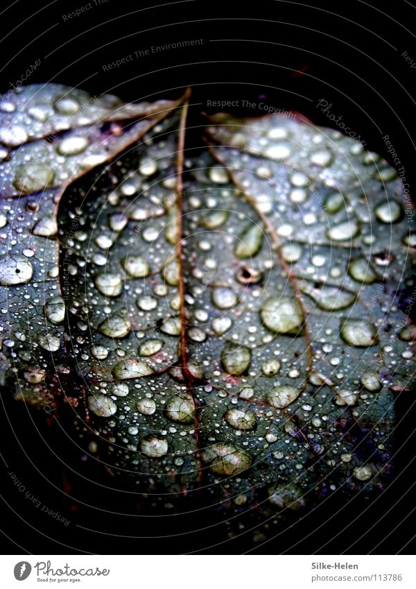 Red Leaf Autumn Sadness Rain Weather Grief Violet Thunder and lightning Vessel