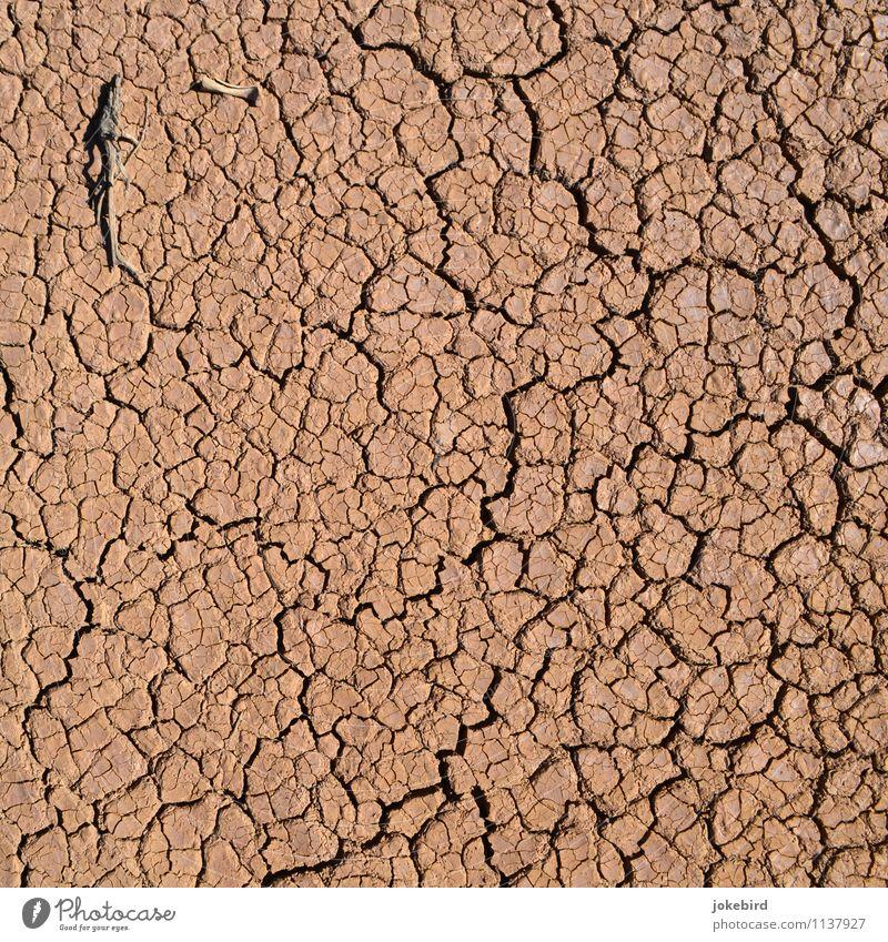 aridity Earth Drought Desert Dry Skeleton vertisol Colour photo Exterior shot Deserted Copy Space left Copy Space right Copy Space top Copy Space bottom