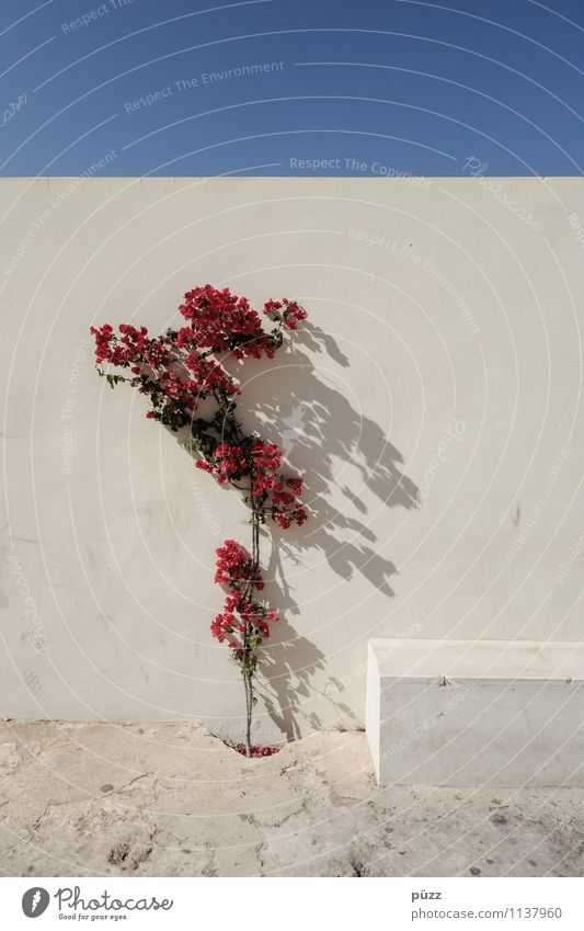 City Blue Plant Beautiful Colour Summer White Flower Red House (Residential Structure) Wall (building) Blossom Building Wall (barrier) Garden Stone