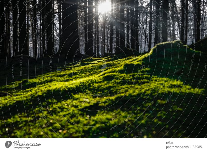 Nothing going on without moss Environment Nature Landscape Plant Earth Sun Sunlight Tree Moss Forest Wood Dark Natural Wild Green Black Sadness Grief Loneliness