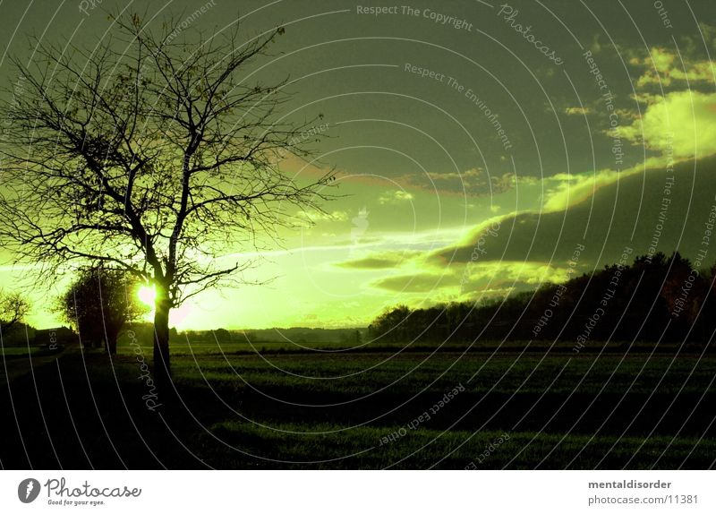 Landscape in green Tree Green Clouds Meadow Left Plant Nature Sky Far-off places Branch Filter Tree trunk