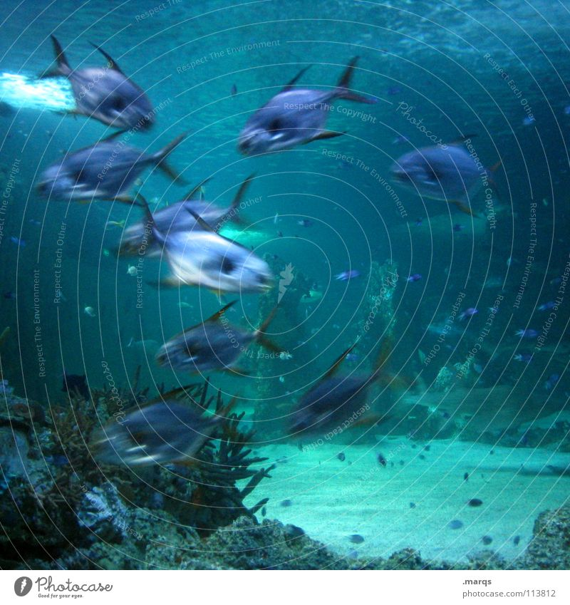excitement Water Shoal of fish Aquarium Ocean Lake Pond Zoo Versatile Animal Muddled Brisk Together Gill Fish Underwater photo Blue Movement Dynamics swim