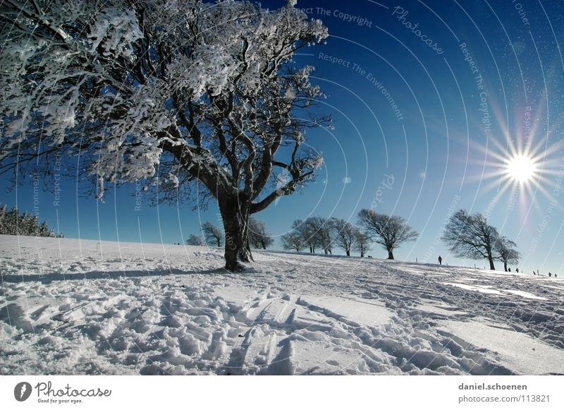 Christmas card 17 Sunbeam Winter Black Forest White Deep snow Winter sports Hiking Leisure and hobbies Vacation & Travel Background picture Tree Snowscape