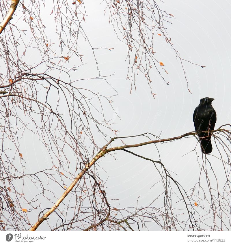 Nature Sky Tree Winter Calm Leaf Clouds Relaxation Autumn Sadness Brown Room Bird Wait Sit Grief