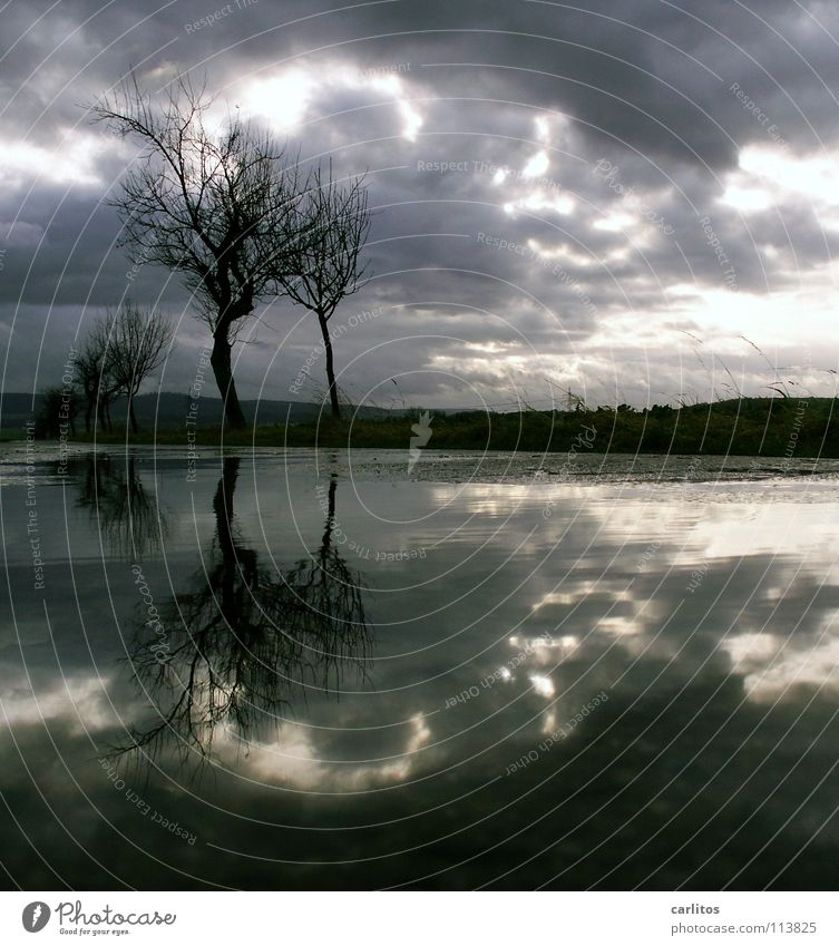 Water Tree Sun Winter Clouds Sadness Horizon Wind Grief Middle Passion Tree trunk Distress Symmetry Puddle Dramatic