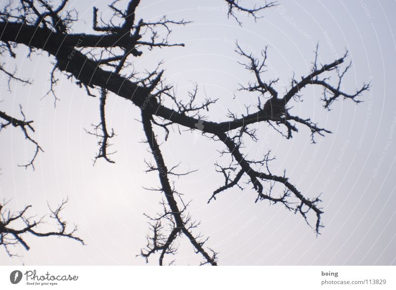 Sky Tree Winter Branch Lightning Boredom Twig Branchage Thorn Firewood Branched