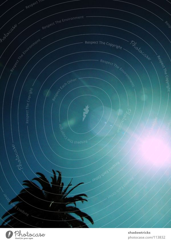 Sky Tree Sun Blue Vacation & Travel Dark Island Africa Radiation Turquoise India Spain Palm tree Brazil Cyan Depart