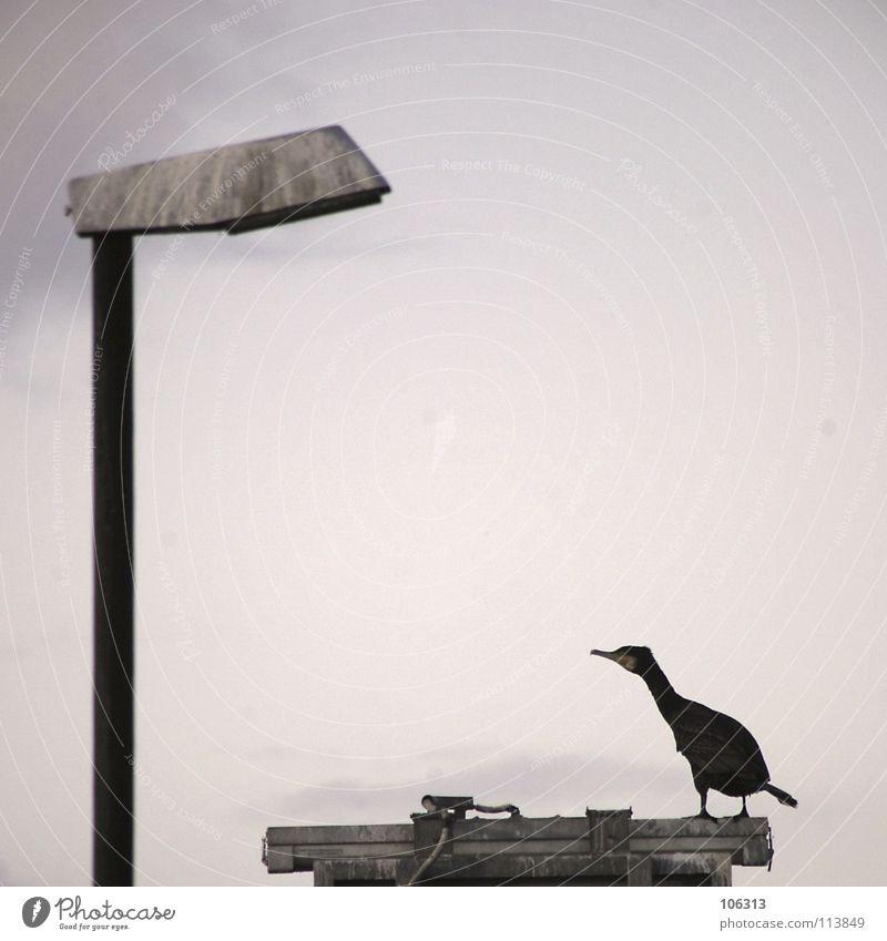 Sky Nature Green Ocean Animal Loneliness Clouds Black Environment Death Life Lake Legs Dream Lamp Metal