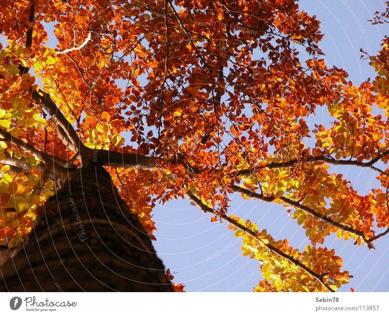 Tree Red Leaf Yellow Autumn Seasons Tree trunk