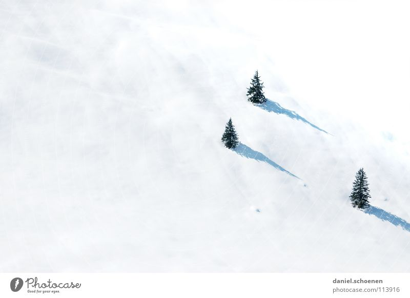 Vacation & Travel White Tree Landscape Winter Snow Gray Leisure and hobbies Trip Mysterious Driving Fir tree Skier Unclear Winter vacation Black Forest