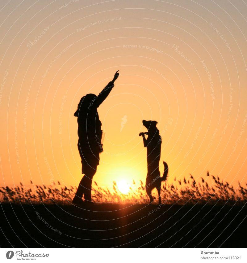 Dance, Lilly, dance! Woman Dog Grass Twilight Red Sunset Friendship Beach Coast sun Evening Dusk Dog food