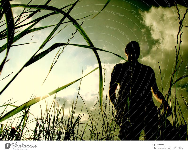 Human being Man Sky Nature Green Sun Beautiful Joy Plant Summer Clouds Life Meadow Emotions Style Freedom