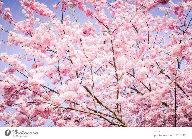 Sky Nature Beautiful Tree Environment Blossom Spring Emotions Feminine Happy Moody Pink Growth Bushes Esthetic Joie de vivre (Vitality)