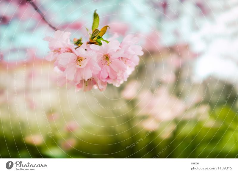 Sky Nature Green Beautiful Tree Environment Blossom Emotions Spring Feminine Healthy Happy Health care Moody Pink Contentment