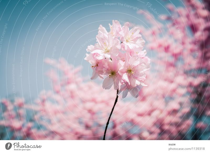 Sky Nature Beautiful Tree Environment Blossom Spring Emotions Feminine Happy Moody Pink Contentment Growth Bushes Esthetic