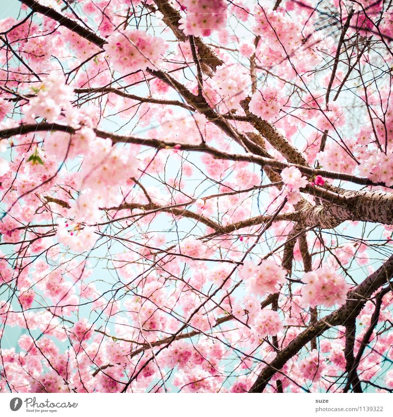Sky Nature Beautiful Environment Spring Blossom Emotions Feminine Happy Moody Pink Growth Bushes Esthetic Branch Blossoming