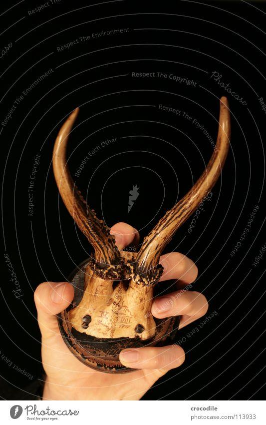 deer hand Deer Roe deer Antlers Hand Low-key Fingers Animal Defensive Wood Skeleton 1910 Death shot and killed Old To hold on clench Human being Murder