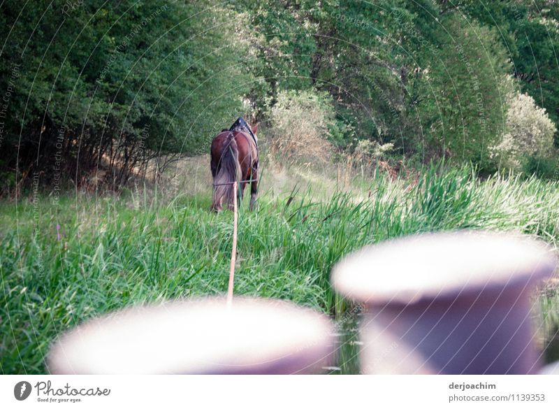 1 HP Joy Relaxation Trip Services Environment Grass Channel Bavaria Germany Deserted Boating trip Animal Horse Utilize Observe Discover To enjoy Smiling Looking