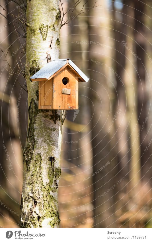 For rent, best location... Nature Landscape Tree Forest Birdhouse Hang Small Joie de vivre (Vitality) Safety Protection Safety (feeling of) Love of animals