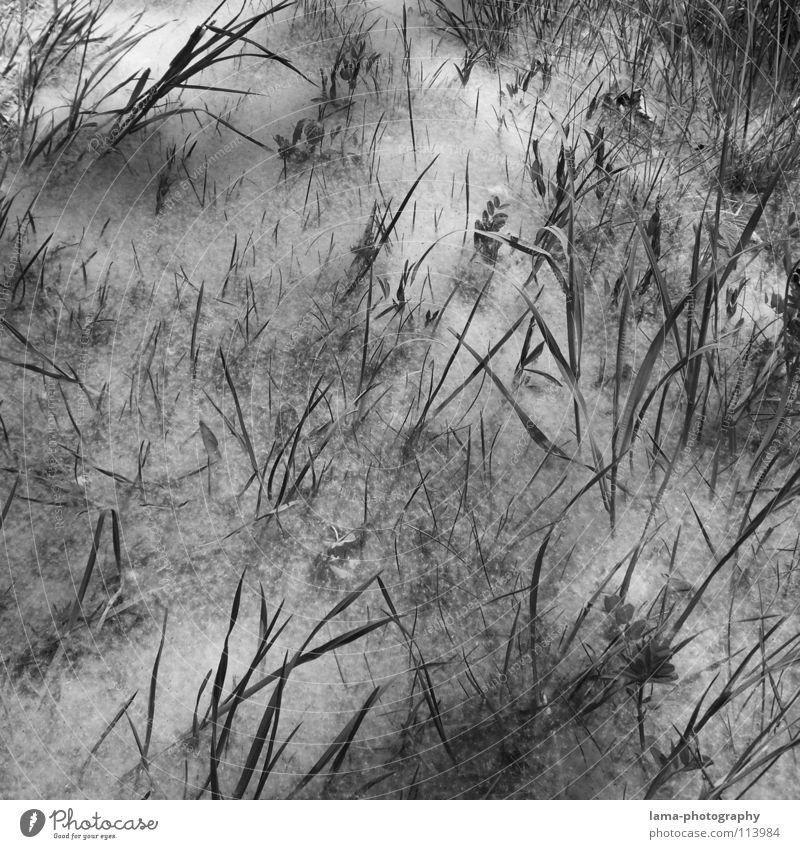 White Tree Ocean Flower Leaf Winter Clouds Black Meadow Grass Lanes & trails Line Room Field Fog Places