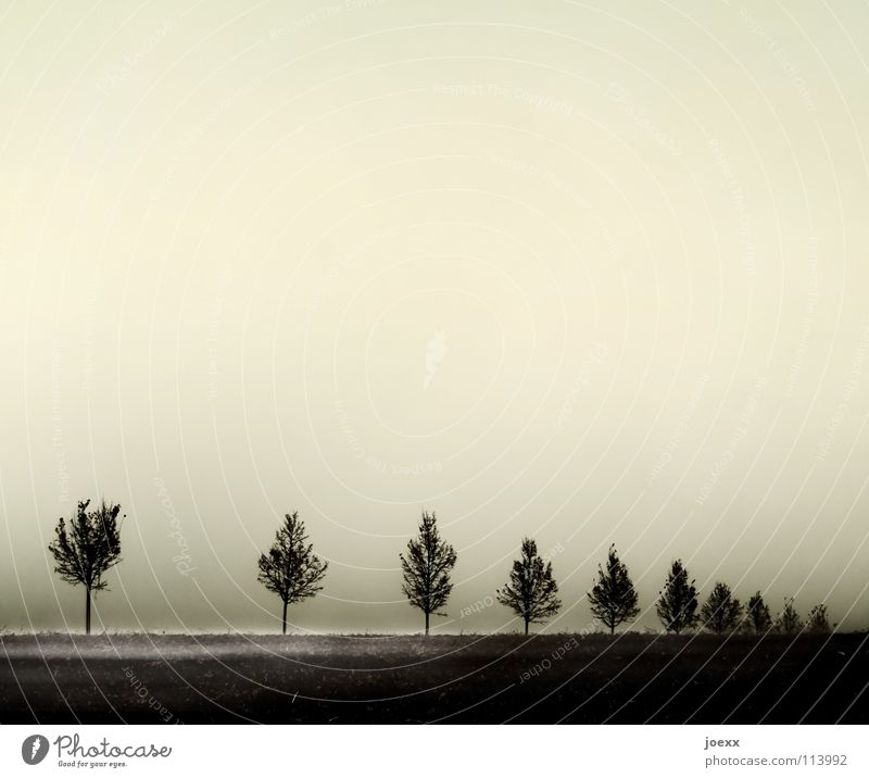 gap Tree Row of trees Ground fog Fog Calm Grief Distress Autumn Gloomy uniform conformal Sadness Intersection