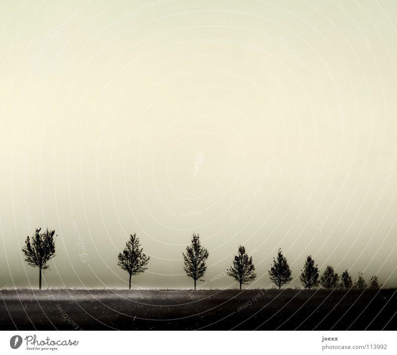 Tree Calm Autumn Sadness Fog Grief Gloomy Row Distress Intersection Row of trees Ground fog