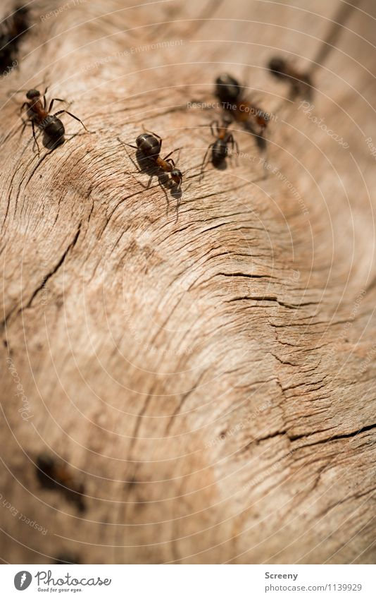 off to work... Nature Plant Animal Forest Wild animal Ant Group of animals Wood Crawl Small Together Colour photo Exterior shot Detail Macro (Extreme close-up)