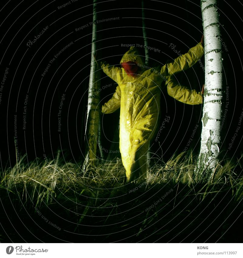 dragonfly king Yellow Gray Gray-yellow Forest Suit Protective clothing Crazy Night Long exposure Birch tree Concentrate Might deep in the woods