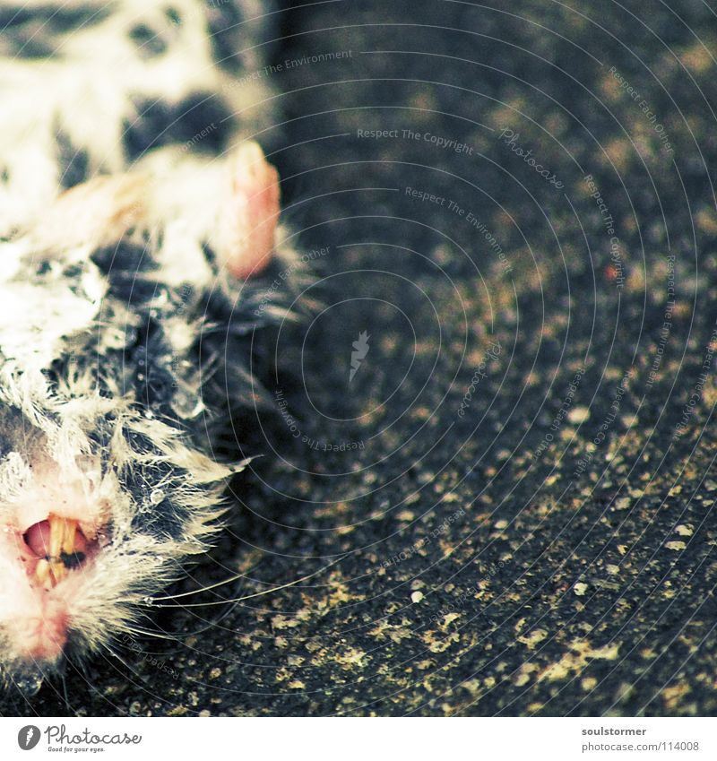 Animal Eyes Death Life Hair and hairstyles Small Wet Nutrition Cute Transience Ear Pelt Mouse Paw Mammal Disgust