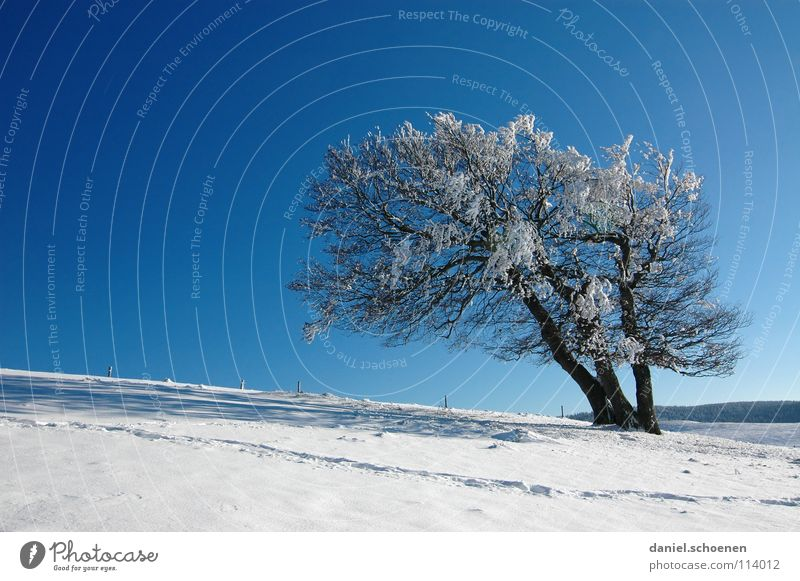 Christmas card 19 Winter Black Forest White Deep snow Hiking Leisure and hobbies Vacation & Travel Background picture Tree Snowscape Horizon Loneliness Cold